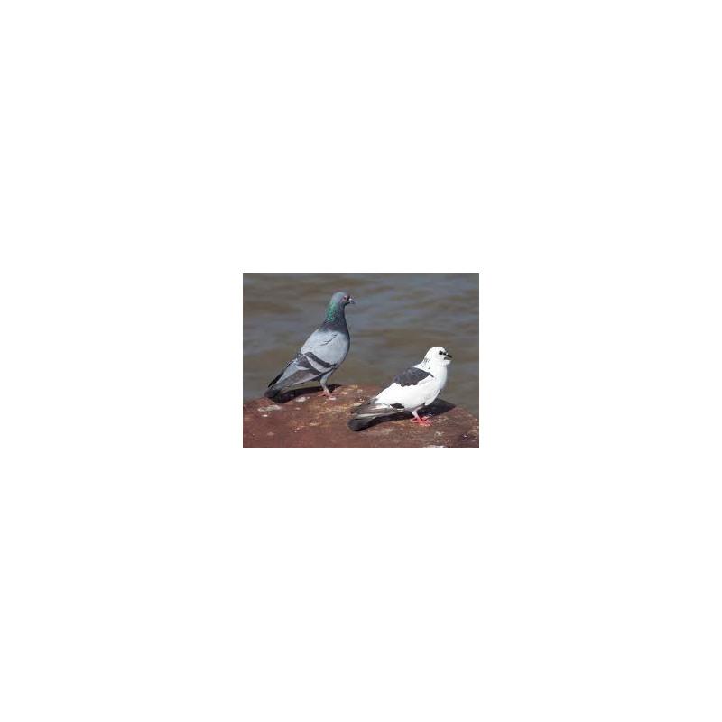 Ultrasonic bird repellent repels dog cat repellent dove